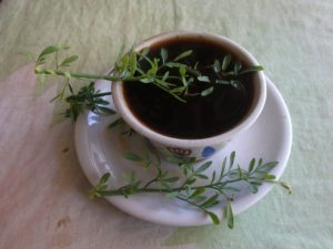 a picture of Ethiopian culture coffee in a small cup with the green herb Tena Dom in it.