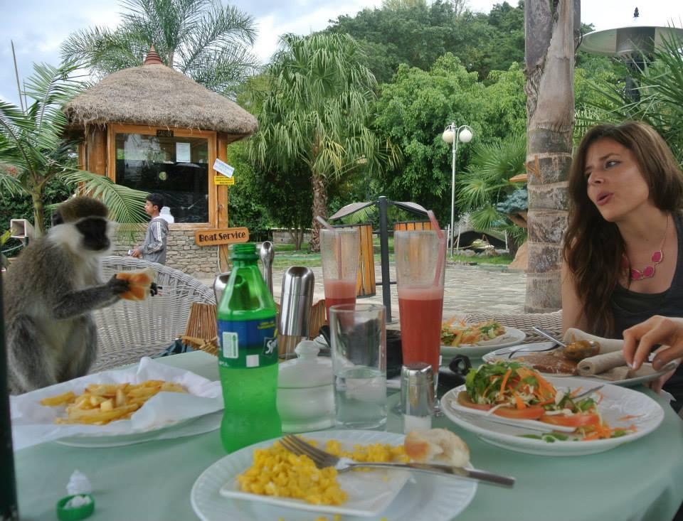 Lewi resort in hawassa, feeding monkeys